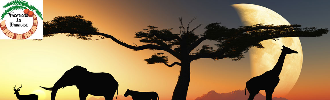 Explore the wonders of Africa